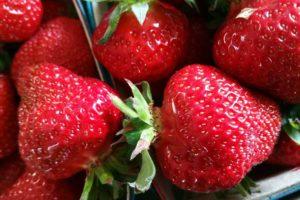 fraises chez annie